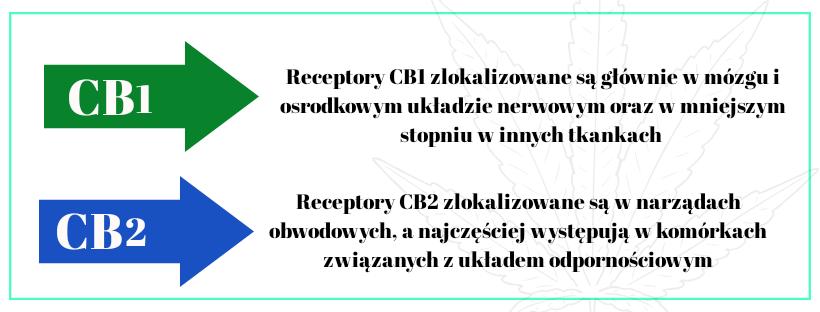 CB1 i CB2